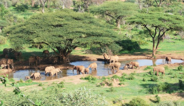 Elephants roam the rangelands on the Il Ngwesi group ranch. Photo from Kenya.com